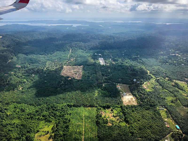 Palm oil fields instead of the jungle