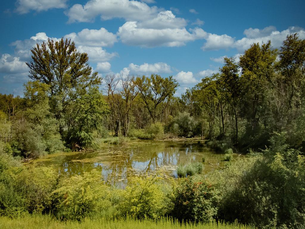 La forêt inondée du Rohrschollen... 50100856968_5d07bb3776_b
