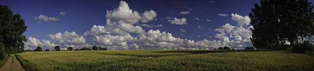 Panorama of a grain field | July 11, 2020 | In the district of Plön - Schleswig-Holstein - Germany