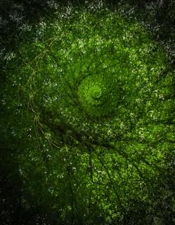 Spirale végétale