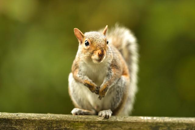 2020 07 11 squirrel 4836