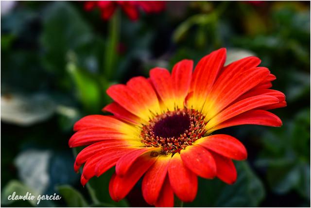 Retrato floral / Floral portrait