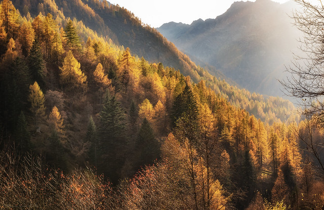 Painting the larches