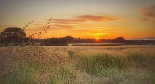 field earlymorning corn summer lewannick sunrise cornwall