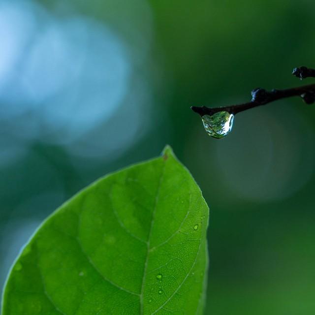 129/366 - Droplet