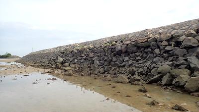 Mangroves on Pulau Hantu seawall