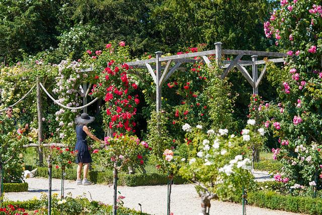 Bagatelle roses garden