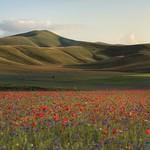11. Juuli 2020 - 19:50 - Castelluccio di Norcia, fioritura 2020.