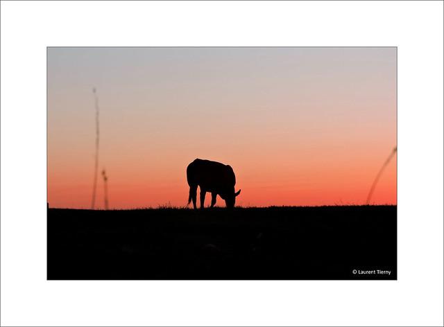 Après le coucher du soleil...