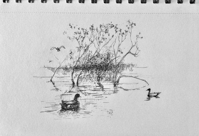 Pin sketch. Fallen tree and ducks, Gresford Lake, just for fun.