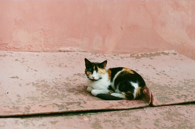 A peaceful rest of the lovely cat on a warm day. Look at her little toes! Kotelniki yard, Russia