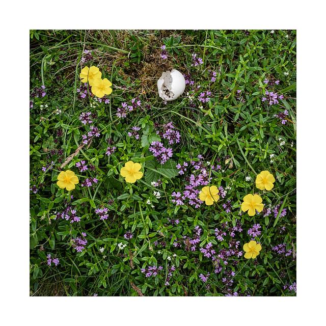 Egg, Flower, Tyme