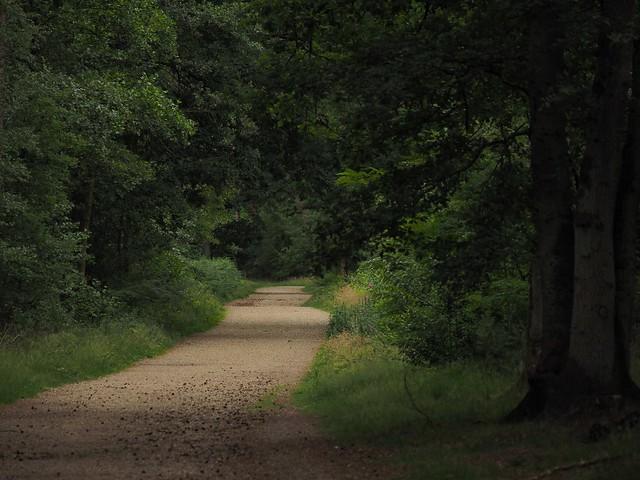 Waldweg Tevener Heide