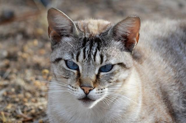 Cat 💙