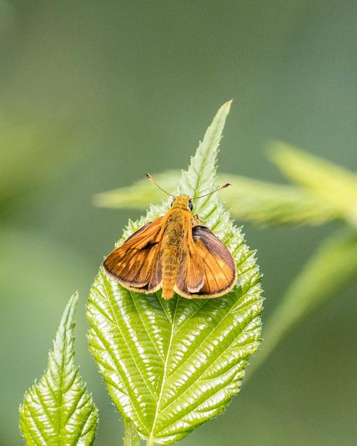 Insekten-46096-20200711.jpg
