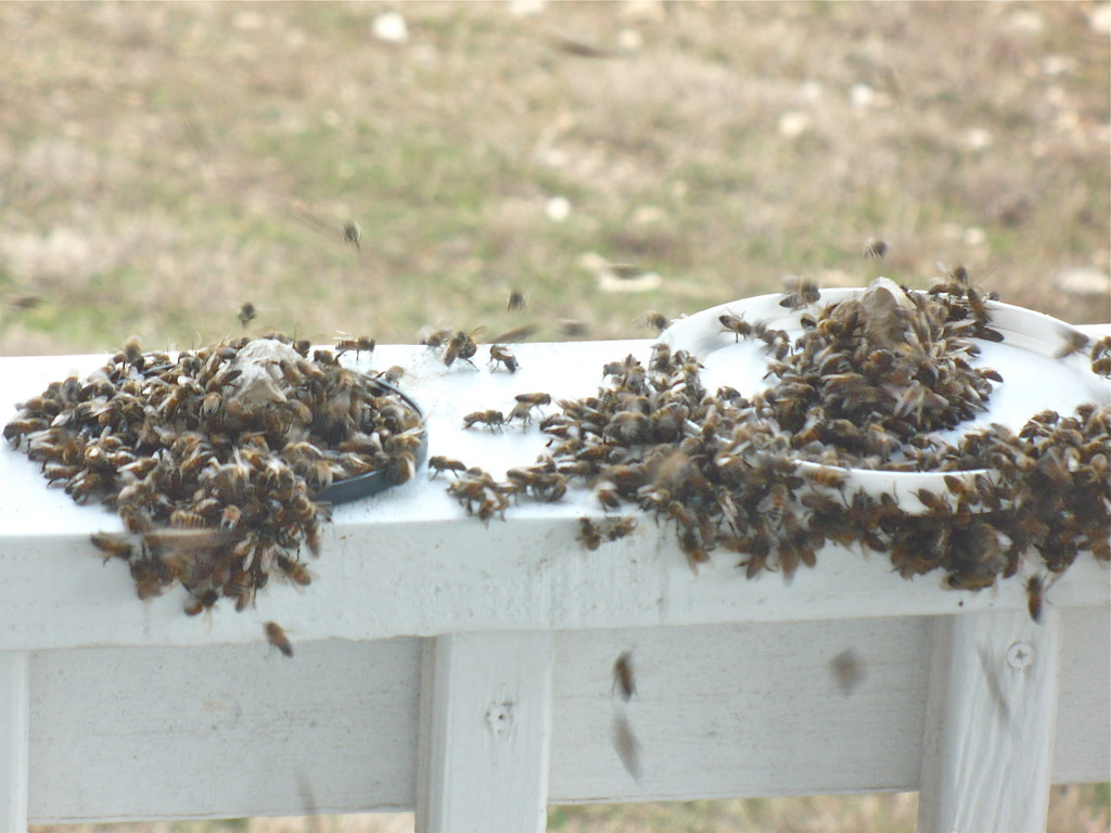 Feeding the Honey Bees January 2012