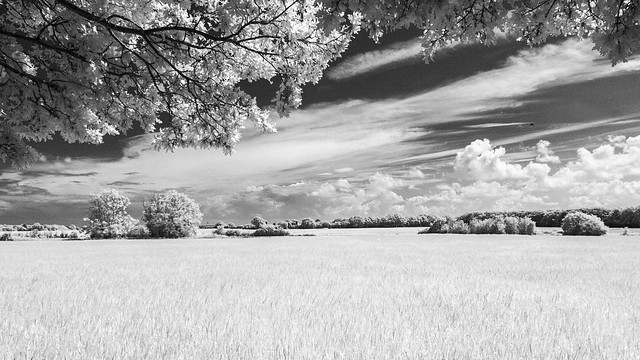 Fields & Trees (infrared)