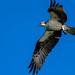 Osprey-53133.jpg