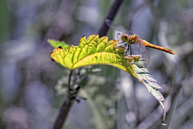 sitting on a leaf