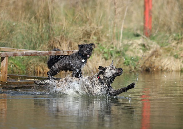 Various photos of the leaping dogs