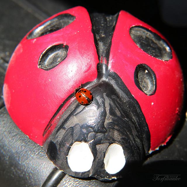 ladybug on ladybug