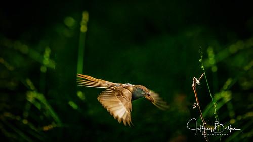 birds mtview ca us gmasterfe100400mmsupertelephotozoomlens sel100400gm flight sonya7iii ilce7m3