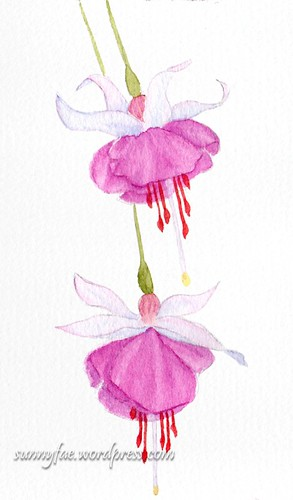 fuchsia watercolour sketch