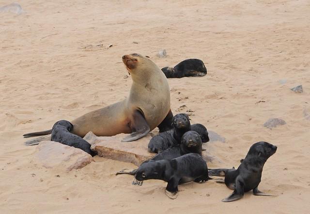 Seal & baby seals