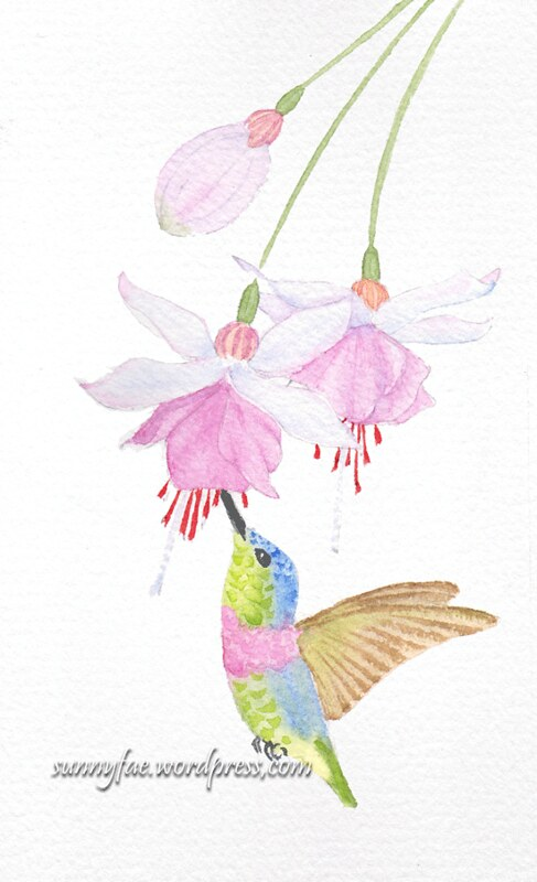 hummingbird and fuchsias