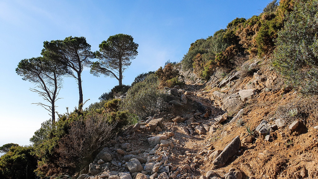 on the right the path climbs up very steeply, and it is covered in brown soil and loose rocks. On both sides of the path there are small green and yellow bushes with spikes. On the left there are tree green pine trees.
