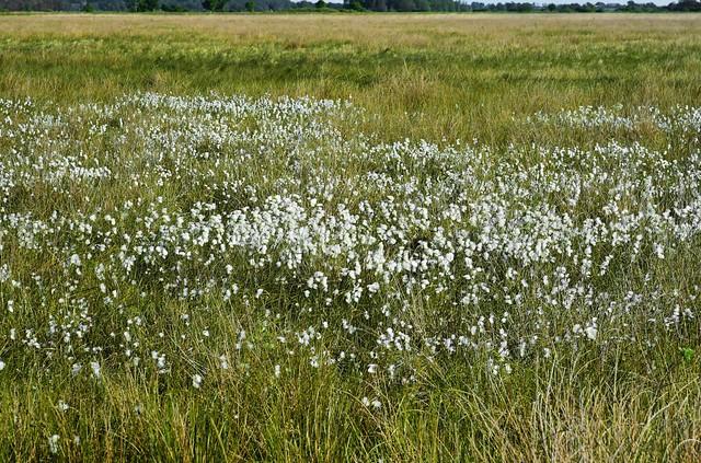 Im Wilden Moor bei Schwabstedt; Schwabstedt, Nordfriesland (2)