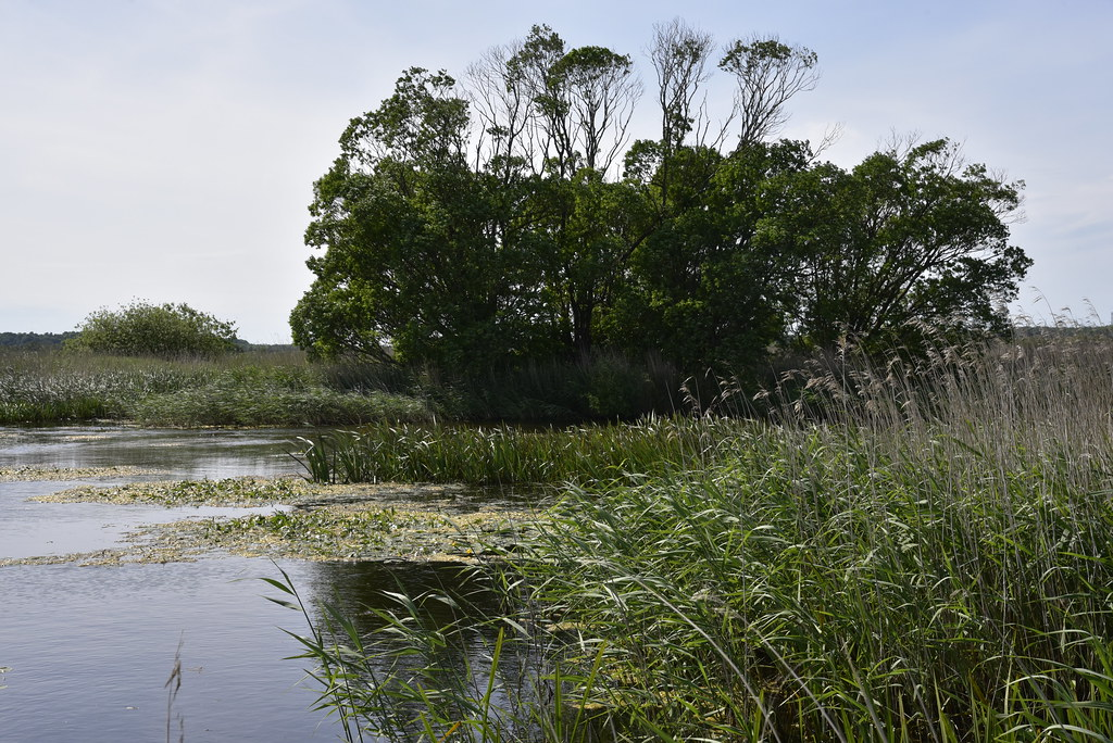 Im Wilden Moor bei Schwabstedt; Schwabstedt, Nordfriesland (1)