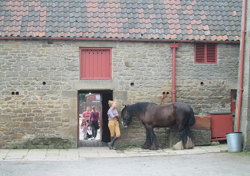 Horse at 1940s Farm, Beamish