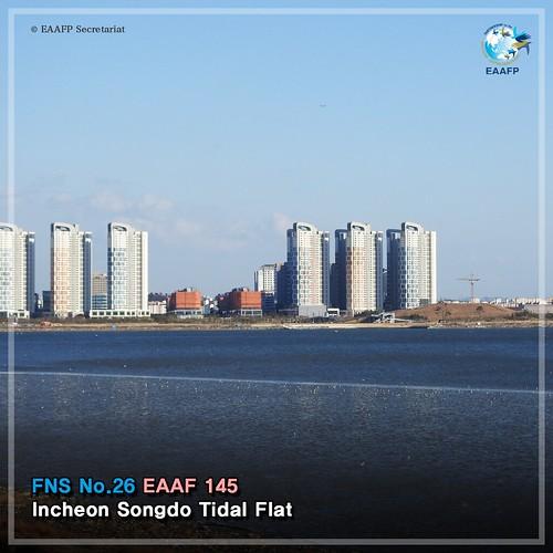 Incheon Songdo Tidal Flat_#FridayNetworkSite Card News