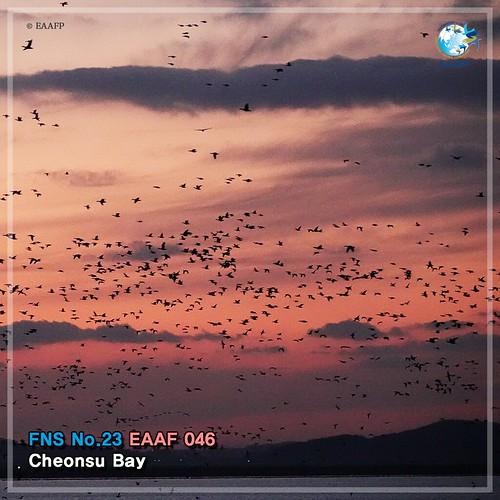 No. 23_#FlywayNetworkSite (Cheonsu Bay) Card News