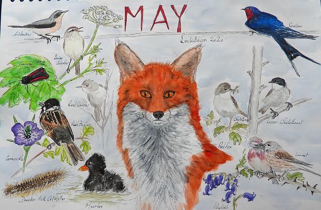 Wildlife Sketch, May 2020 (Lockdown), P1 (2)