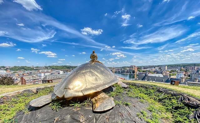 #Turtle - 8640