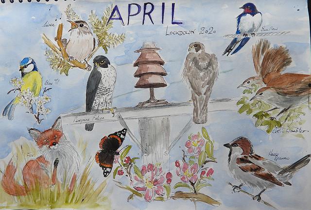 Wildlife Sketch, April 2020 (Lockdown), P1 (2)
