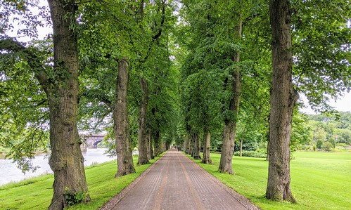 Tree lined walkway at Avenham Park | by Tony Worrall