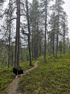 IMG_20200624_113519 | by adventurelandlapland