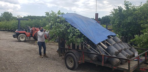 Photo of trailer load of containerized trees