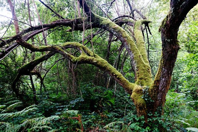 bosque / woodland, Villamayor, Piloña