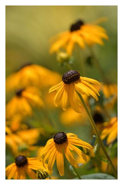Planta tu propio jardín y decora tu propia alma en lugar de esperar que alguien te traiga flores.