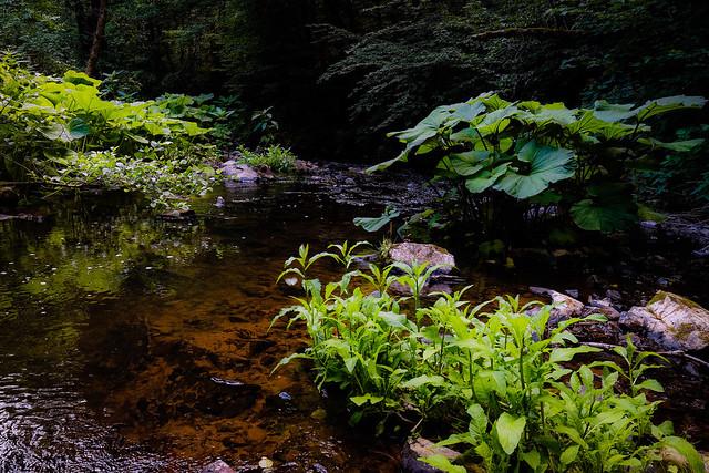 Shades of Eifel Green / Eifelgrüner Bach