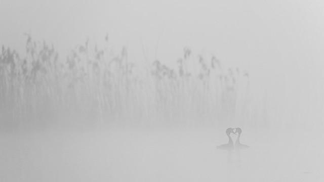 Geturtel im Nebel