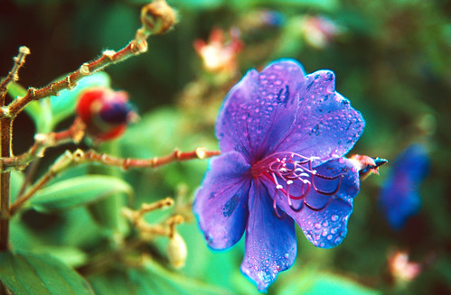 Flower in Kauai