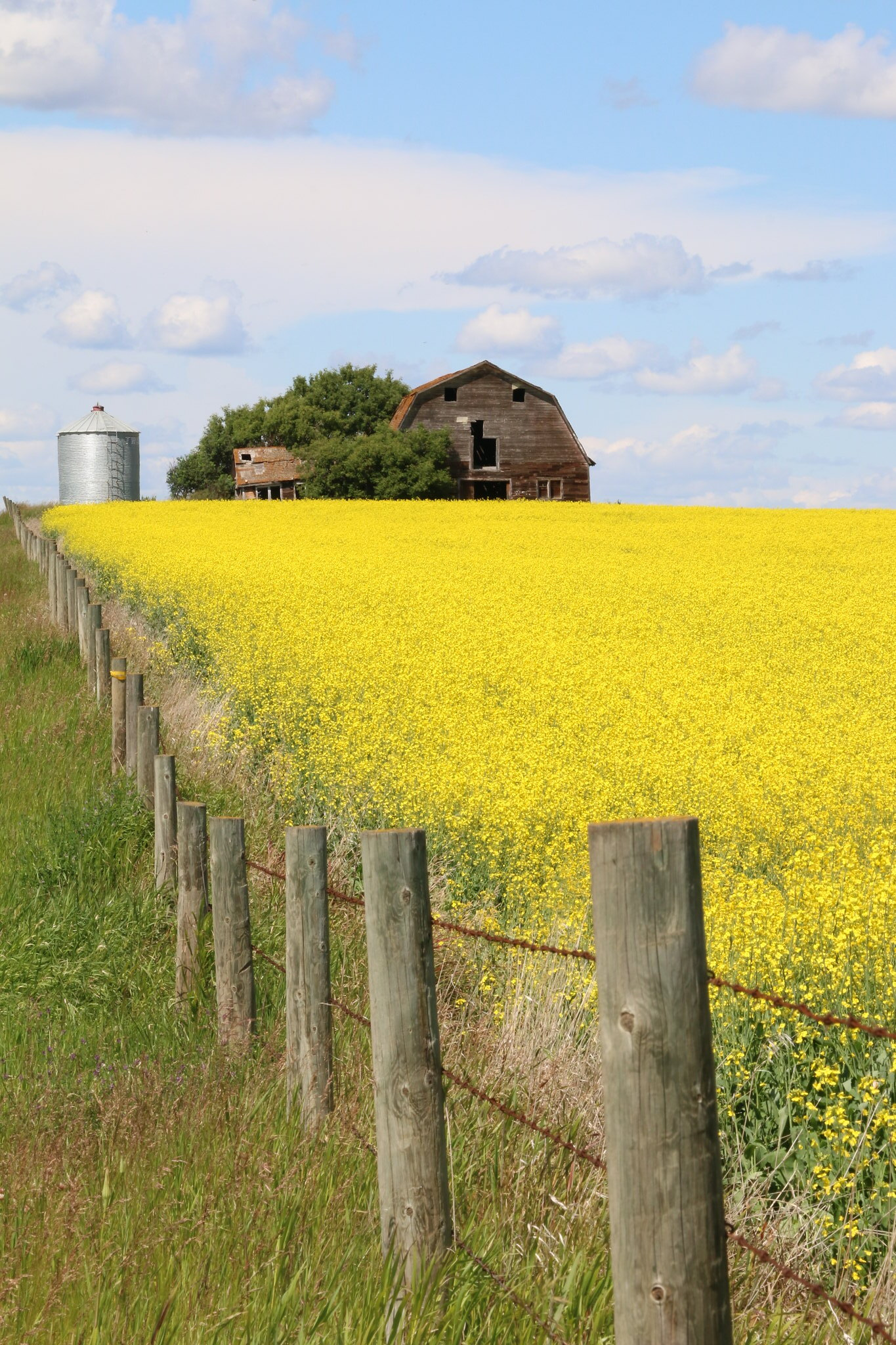 Summer Prairie Afternoons (SOTC 363/365)