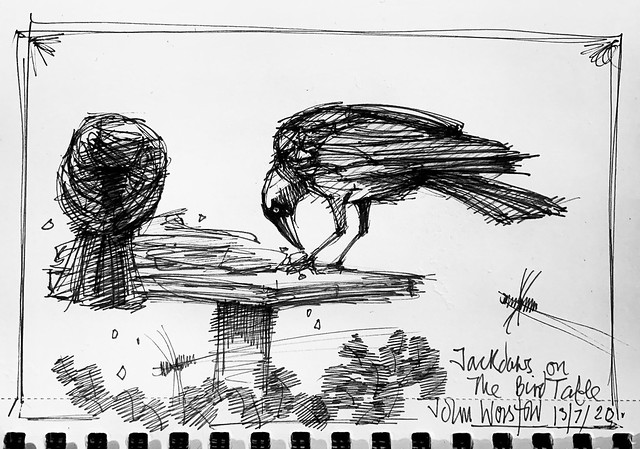Jackdaws on the bird table. Ballpoint pen drawing by jmsw. Today.