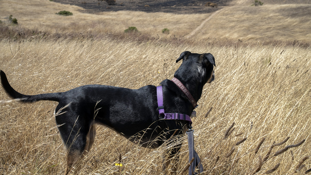 Kaili on our walk as she looks out to the horizon. (July 13, 2020, San Francisco, CA)