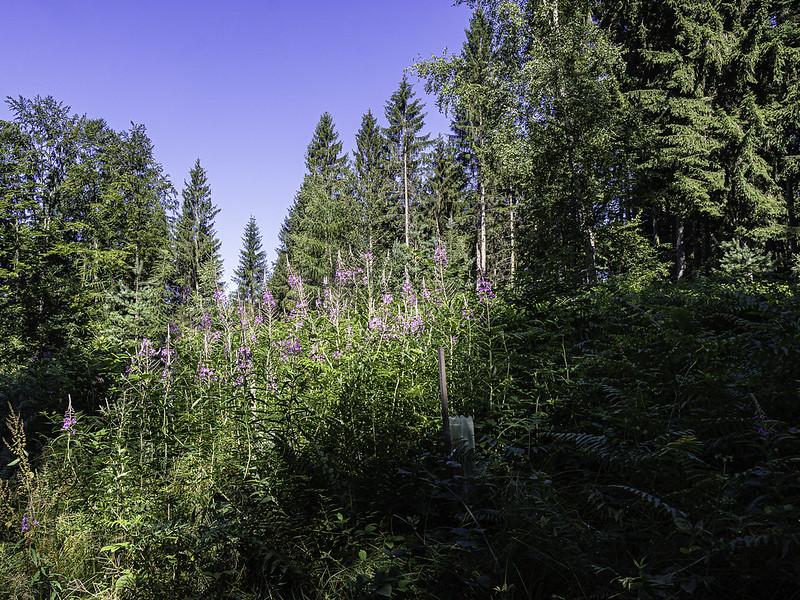 Morgen Genuss im Wald